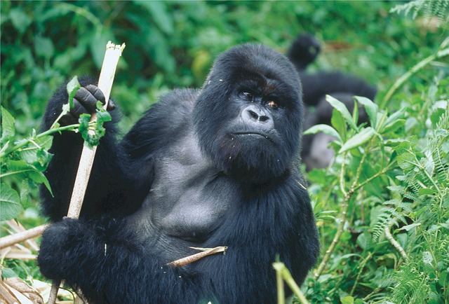 Conseils Voyage Rwanda – Avis