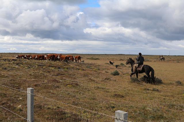 Au cœur du bassin de production laitière du Chili